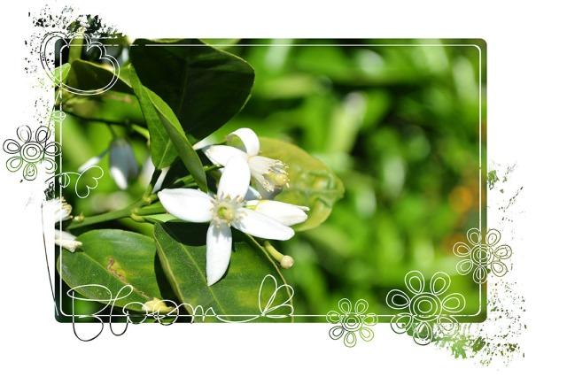 Garden_April2013_1
