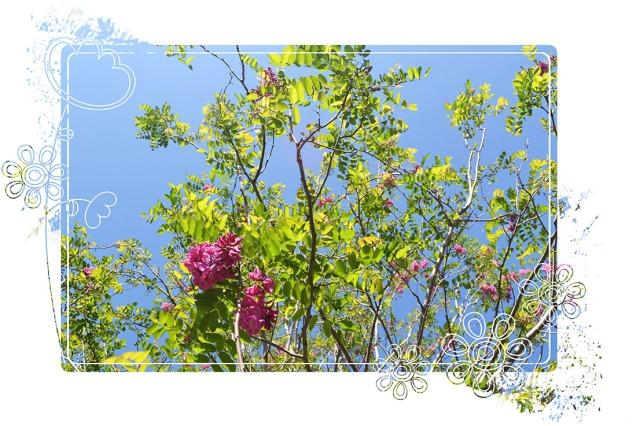 Garden_April2013_2
