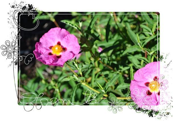 Garden_April2013_4
