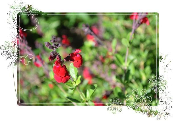 Garden_April2013_5