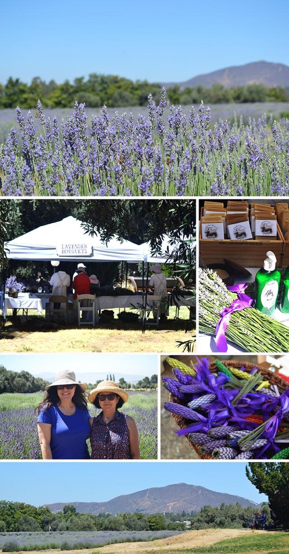 LavenderFestival2013