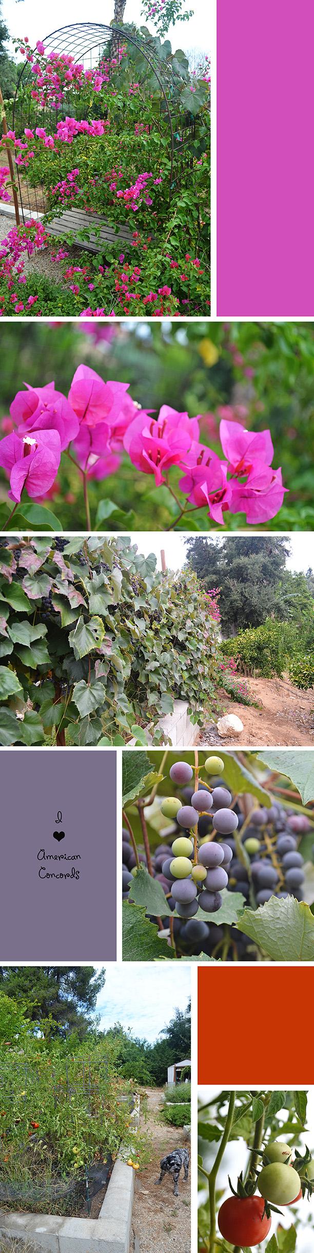 Garden_Aug2013_2